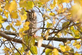 De uilen zijn er weer!